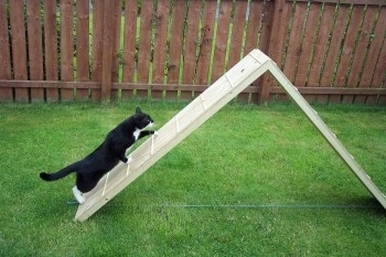 A black with white cat is climbing an agility ladder in a grassy yard.
