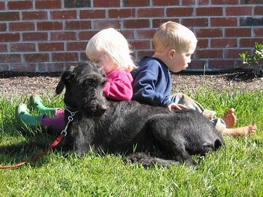 A black Doodleman Pinscher is laying in grass looking to the right in front of a brick wall. There is a girl in a pink sweater and a boy in a blue sweater sitting behind the dog.