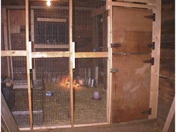 The new keet coop inside of a chicken coop barn. It has a wooden door and a wire mesh wall strengthened by wood beams.