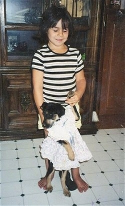 A little girl holding the paw of a small black and tan dog who is standing on its hind legs and wearing a dress on a white tiled floor with wood furnture behind them