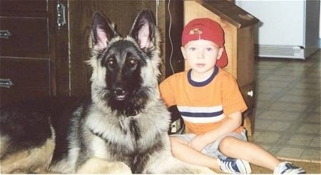 A boy in a red hat is sitting next to a black with tan Shiloh Shepherd that is laying across a carpeted surface and they are looking forward. The dog is bigger than the child.