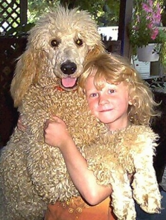 A curly, tan Poodle is standing up against a blonde haired girl with its front paws draped across the girls arm. The Poodles looks happy with its mouth open and tongue out. The dog is bigger than the child.
