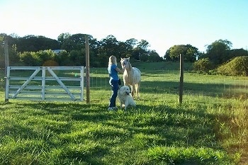 A Great Pyrenees is sitting next to a lady in a blue shirt in front of a wire fence with a horse behind it who the lady is petting.