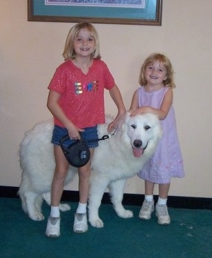 A blonde haired girl is standing in front of a Great Pyrenees dog and behind the dog is a smaller blonde-haired girl. They both are touching the dog.