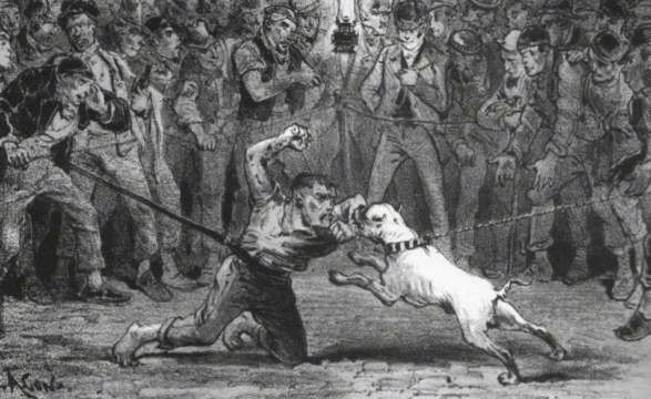 A drawing of a man fighting a bulldog in front of a bunch of people in a dog pit ring