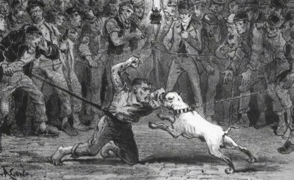 Bulldog Throwbacks Examples Of Bulldogs From The Long Ago