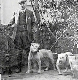 A picture of a man that is standing next to two bulldogs on leashes.