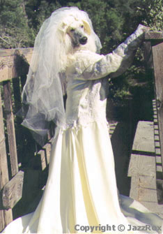 A White Poodle is standing on her hind legs on a porch. She is wearing a wedding dress and looking to the right