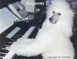 A white Poodle has its front paws on the piano keys and is looking to the left
