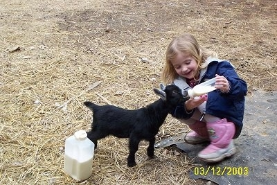 A blonde haired girl is happily feeding a kid goat milk from a bottle.