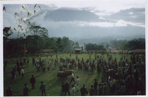 A large amount of people are surrounding two bulls in a field who are fighting and in the background is a large volcano.