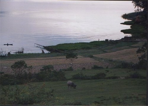 A field with a bull in it and behind it is a large body of water.