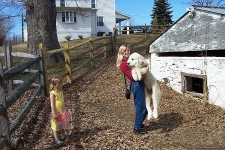 A lady in a red shirt is picking up a Great Pyrenees puppy. There is a girl in a yellow dress watching. There is a springhouse in front of them. The puppy is almost as tall as the lady.
