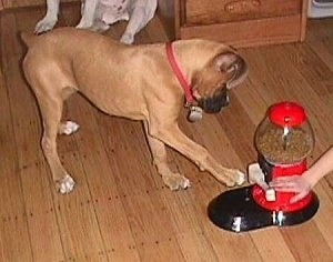 The right side of a Boxer is reaching to hit the lever of a Yuppy Puppy. A persons hand is touching the lever.