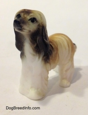 The front left side of a white with tan and black Tiny vintage bone china Afghan Hound dog figurine that has a painted black nose and eyes with a long coat and long ears that hang down with a lot of hair on them.