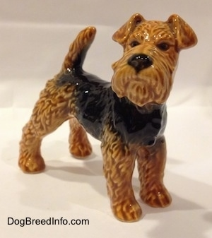 The front right side of a black and brown Vintage Airedale Terrier dog West Germany Goebel figurine that has painted black eyes and a painted big black nose.