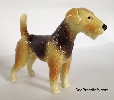 The front right side of a black and tan with white Vintage Goebel Airedale Terrier porcelain dog figurine. The dog has a black nose and its tail is up high in the air.