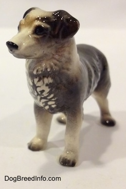 The front left side of a black and white Australian Shepherd figurine.