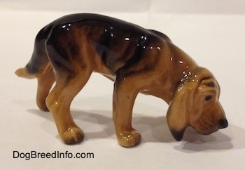 The right side of a brown and black Hagen Renaker Miniature Bloodhound figurine. The figurine is glossy. The dog has smelling the ground. It has a long tail and long drop ears that hang down to the sides of the dogs face. The dogs nose is painted black and it has black eyes. It has wrinkles on its forehead.