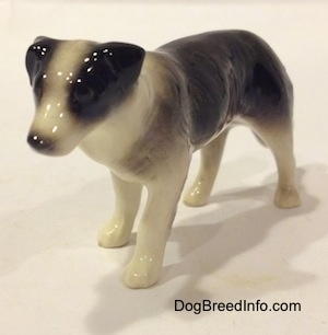 The front left side of a Retired Hagen-Renaker black with white Border Collie style 1 figurine. The figurine has very detailed eyes, but they are hard to differentiate from the face.