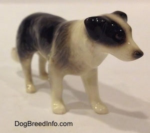 The front right side of a Retired Hagen-Renaker black with white Border Collie style 1 figurine. The figurine has great hair details.