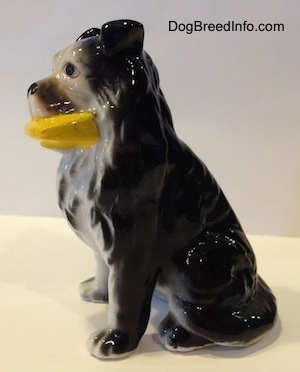 The left side of a Vintage bone China black with white Border Collie figurine that has a yellow frisbee in its mouth. The hair details on the figurine is very great.