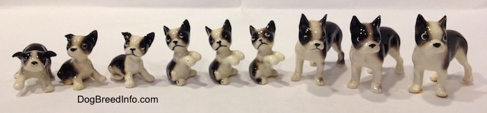 A line-up of different black and white miniature Boston Terrier figurines. The figurines have a range from puppy to fully grown.