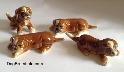 Four brown with white Boxer puppy figurines.