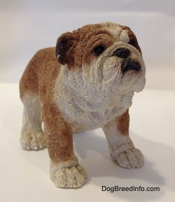 The front right side of a brown and white ceramic mold of a Bulldog figurine. The figurine has great face details.
