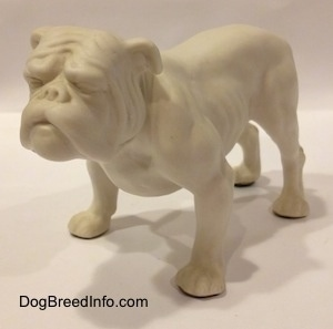 The front left side of a white bisque porcelain Bulldog figurine. The figurine has a wrinkly face.