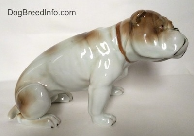 The right side of a white with brown Bulldog figurine in a sitting pose. The figurine is very glossy.