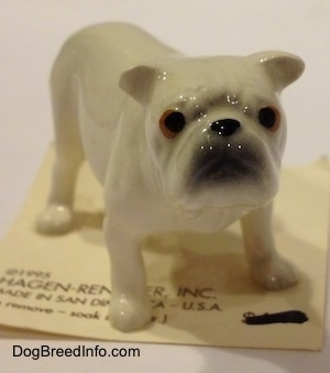 The front right side of a white miniature Bulldog figurine. The figurine has a gray muzzle.