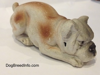 The front right side of a cement mold paperweight made that is a brown with white English Bulldog figurine that is laying down. The figurine has a hole on the side of its face.