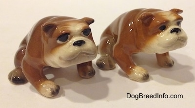 The front left side of two brown with white miniature Bulldogs that are in a sitting pose.