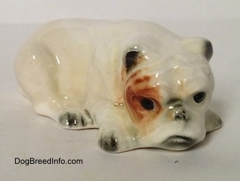 The front left side of a miniature white English Bulldog figurine that is in a lying down pose with a brown spot over its left eye.