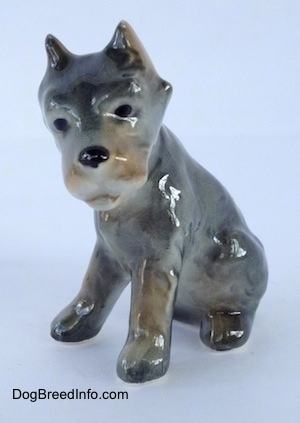 The front right side of a grey with black and tan Cane Corso Italiano puppy figurine. The figurine has black circles for eyes, a black nose and small perk ears.