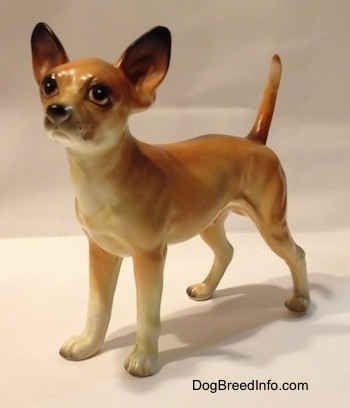 The front left side of a porcelain tan with white Chihuahua figurine. The figurine has fine details.