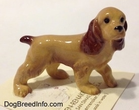 The right side of a tan with brown ceramic Cocker Spaniel figurine. It has detailed black circles for eyes.