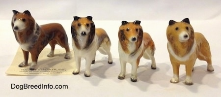 Four Collie dog variations. The inside of all the Collies ears are black.