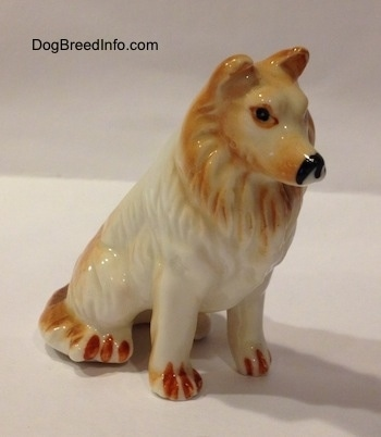 The front right side of a tan and white bone china Rough Collie figurine. The figurine is glossy.
