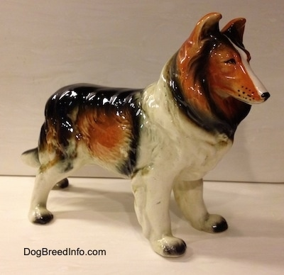The front right side of a highly detailed ceramic black, brown and white Rough Collie figurine.