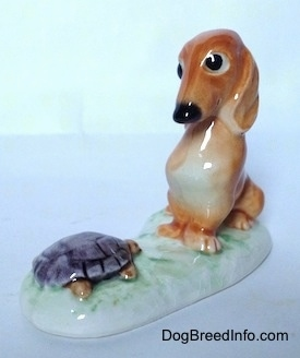 The front left side of a brown Dachshund in a sitting pose that is looking down at a tortoise figurine. The Dachshund and the Tortoise both have short limbs.