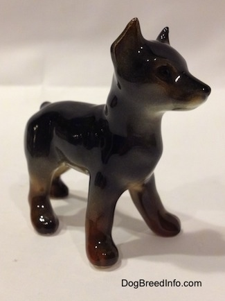 The front right side of a black and brown Doberman Pinscher puppy figurine.