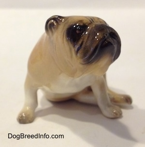 A tan and brown Bulldog figurine in a sitting pose. The figurine has a white chest.