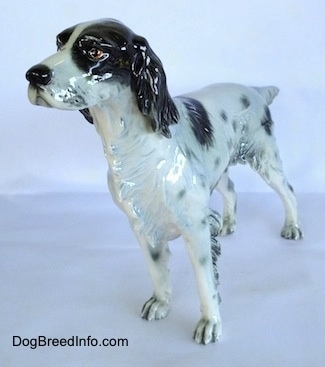 The front left side of a black and white English Setter figurine that is in a standing pose. The figurine has black ears.