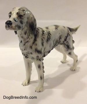 The front left side of a porcelain white and black English Setter figurine. The figurine has black spots and streaks painted on it.