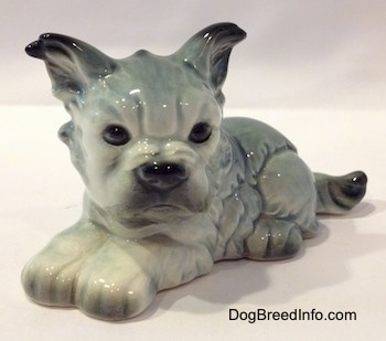 The front left side of a white with black French Bull Tzu. The figurine has black tipped ears.