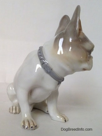 The front right side of a white with grey French Bulldog figurine. This figurine has on a gray-blue collar.
