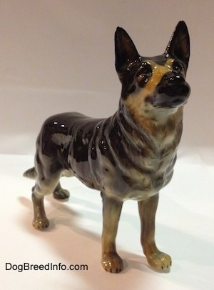 The front right side of a black with tan figurine of German Shepherd standing. The figurine is looking up and it has a black muzzle.