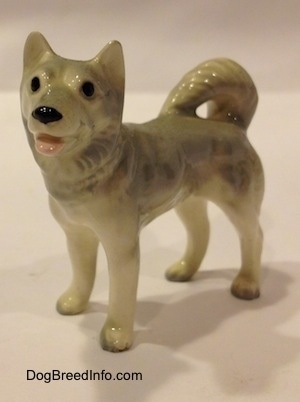The front left side of a figurine of a grey and white Husky. The figurine has a medium sized legs and grey tipped paws.